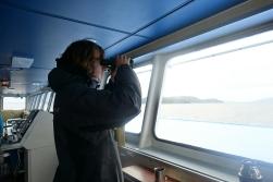 Wale beobachten