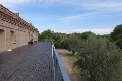 Aussicht über die Olivenbäume