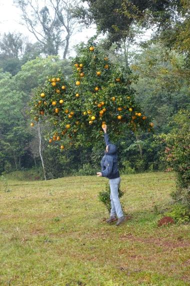 Jagd nach Citrusfrüchte