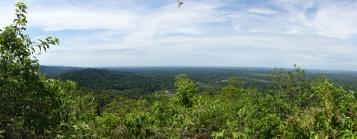 Blick auf den Regenwald