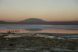 Flamingos im Sonnenuntergang