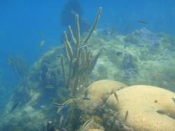 ... und Korallen